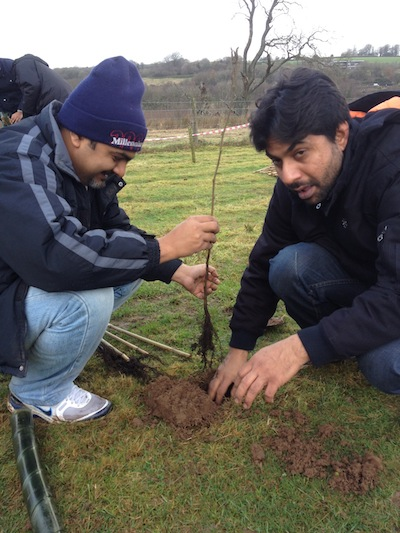 Ahmadi Youth Engaged in National Tree Panting Initiative